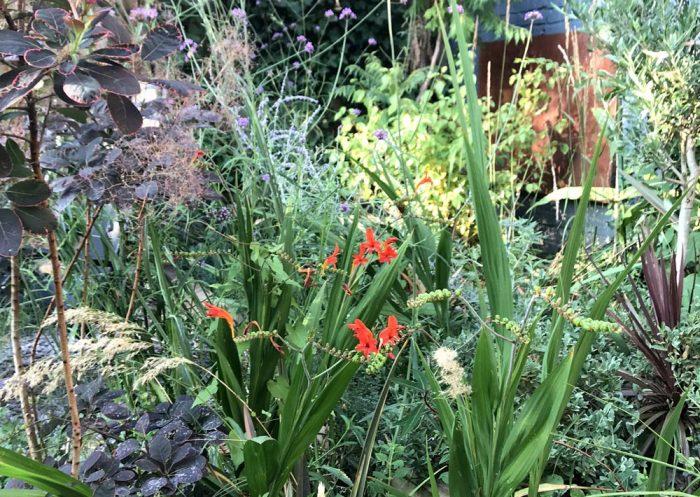 Small Urban Family Garden in Beckenham