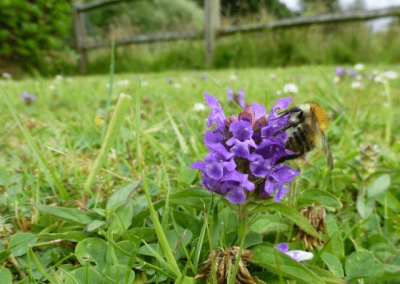 Meadow with Bee