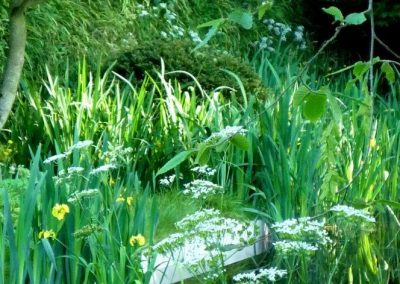 weeds or woodland