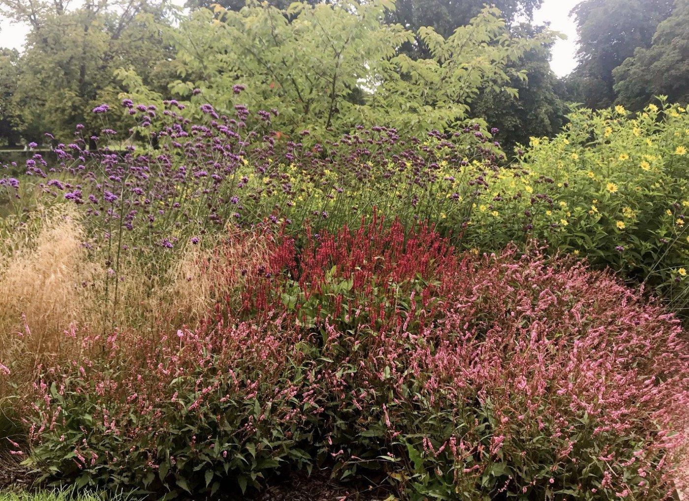 Persicaria, Faith Garden
