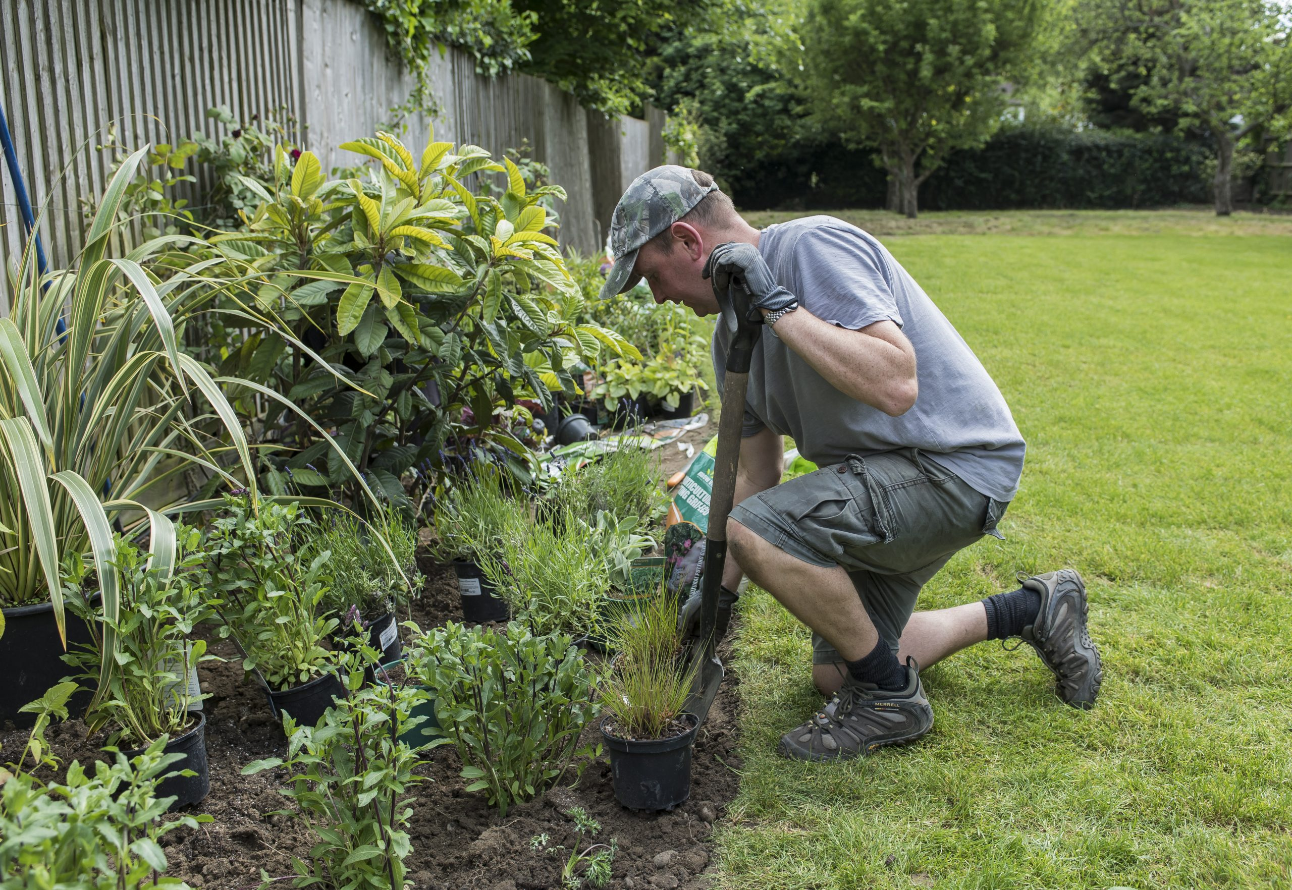Border planting