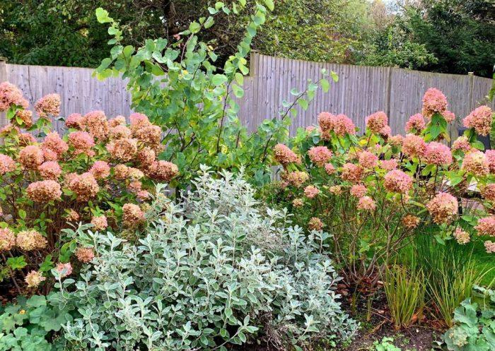 Large Family Garden in Beckenham